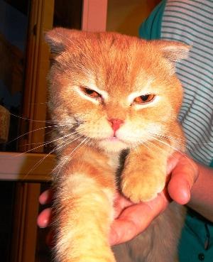 мой кот Пухлик