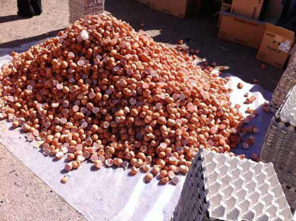 Гигантский омлет из Бессьера фото рецепт Коломна