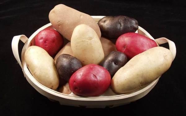 Картофель Нурмуатье