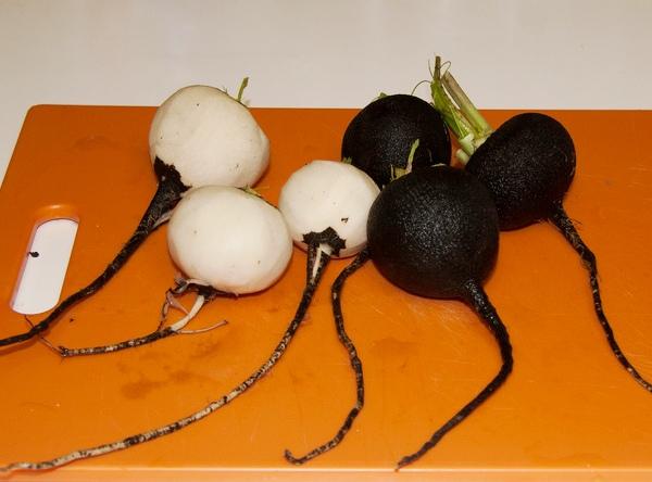 Блюда из редьки черной рецепты