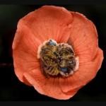Фото пчел в цветах